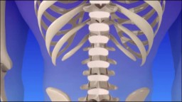 Spine Degeneration