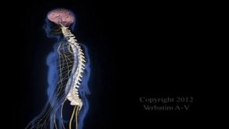 Spinal Injury Animation