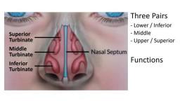 Enlarged Nasal Turbinates, Symptoms, and Treatment