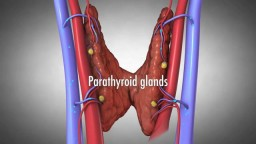 Parathyroid Glands and Hyperparathyroidism
