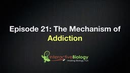Mechanism of Addiction