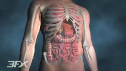 Diabetic Nephropathy Animation 3D