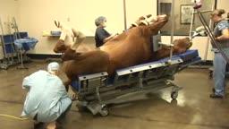 Impressive: A Surgery on a Horse