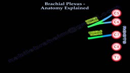 Brachial Plexus Anatomy Explained - Everything You Need To Know - Dr. Nabil Ebraheim