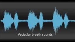 Physiological & pathological breath sounds
