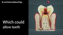 New Regenerative Dental Fillings